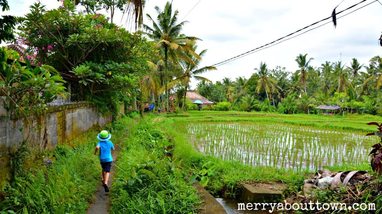Exploring the Rice Paddies Outside Ubud