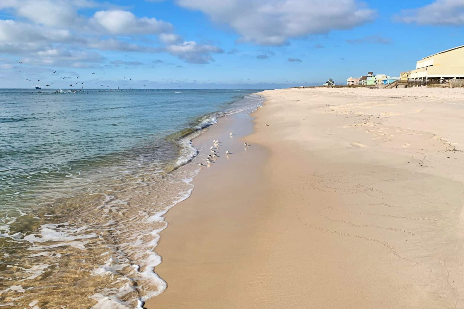 Gulf Shores beaches with beach birds in the background